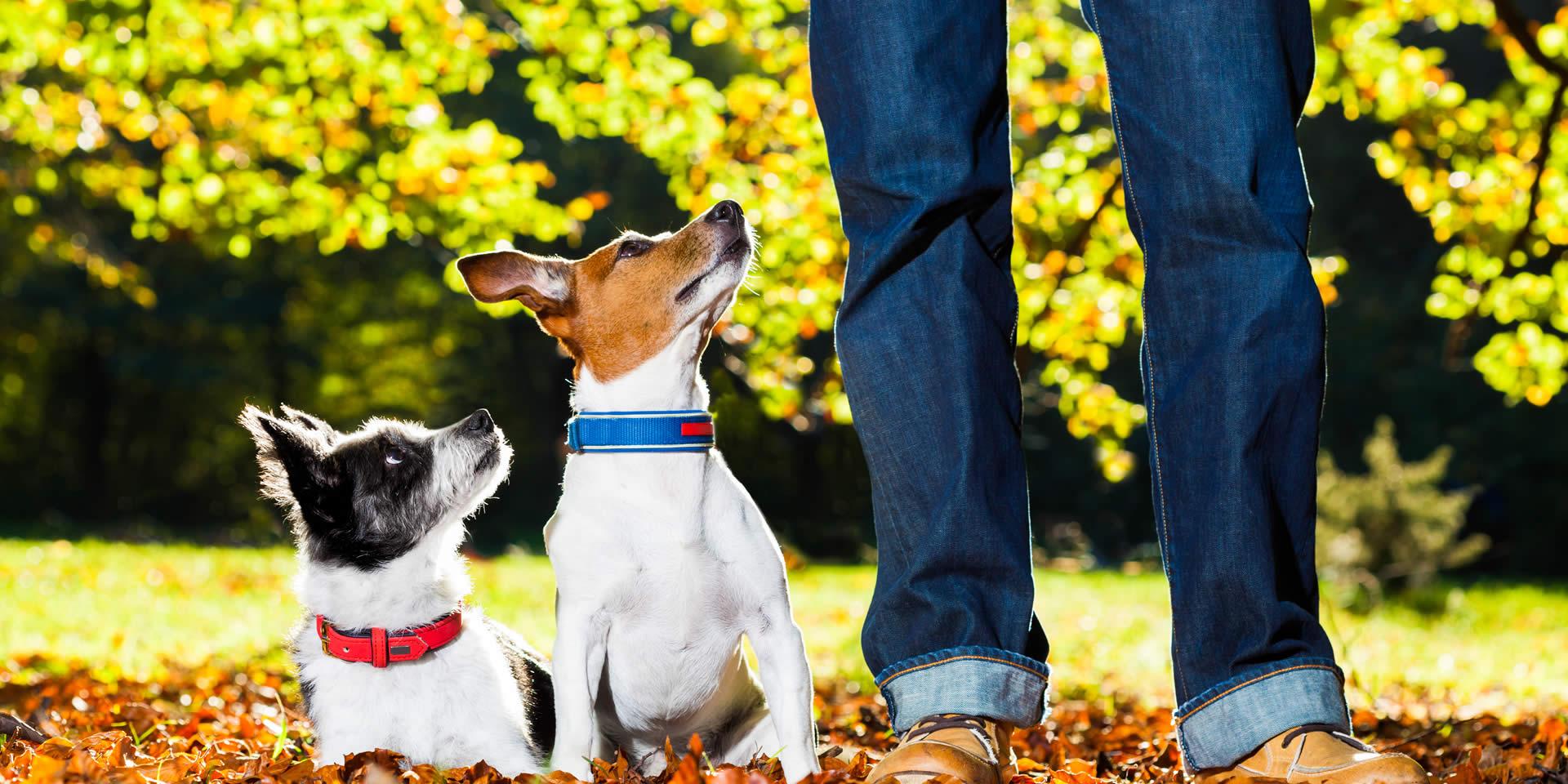 Cani con addestratore