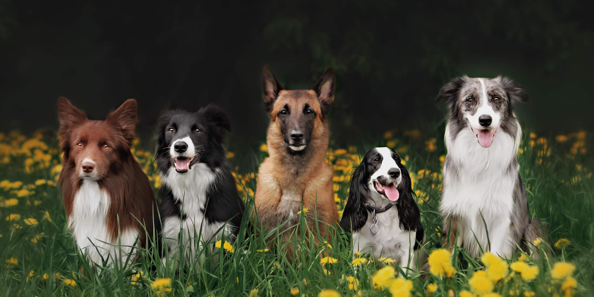 Cani di varie razze